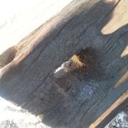 Oak and fire Block